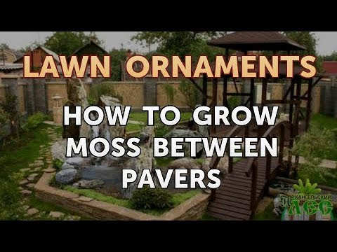 How To Grow Moss Between Pavers