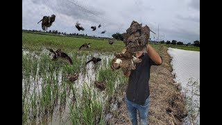 Đi Đồng Nai Bẫy Chim Dẽ Giun Không Ngờ Quá Nhiều Chim Mắc Lưới