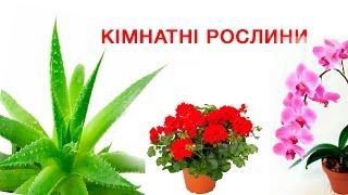 видео Кімнатні і декоративні квіти і рослини