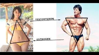 Изменить уровень тестостерона
