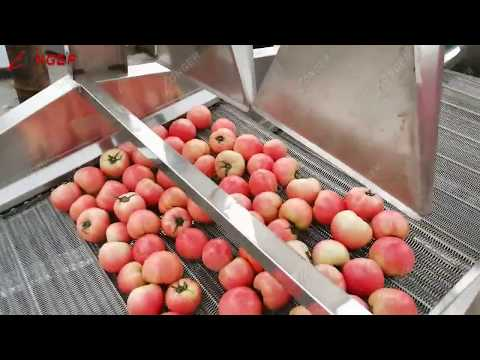 Commercial Fruit Vegetable Washing Drying Line|Tomato Berries Leafy Vegetables Cleaning Machine