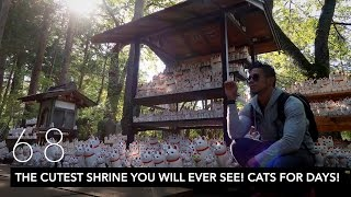 THE CUTEST SHRINE YOU WILL EVER SEE! CATS FOR DAYS! // TOKYO DAY 2 | VLOG 68