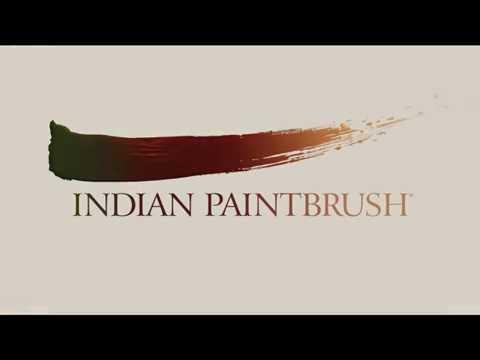 indian paintbrush logo - youtube