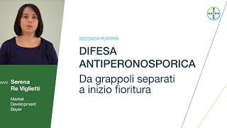 Difesa Antiperonosporica - Da grappoli separati a inizio fioritura