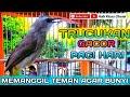 Cruk Cruk Ropel Garuda Trucukan Gacor Pagi Hari Memanggil Teman Agar Bunyi  Mp3 - Mp4 Download