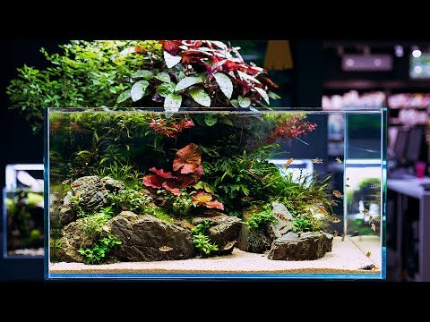 BEAUTIFUL AQUASCAPE WITH 360 VIEW - 1 YEAR OLD NOW - 4K CINEMATIC BY GREEN AQUA