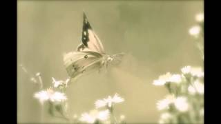 Philip Glass ~ Metamorphosis II