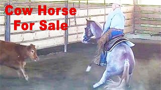 Reined Cow Horse - Cutting Horse For Sale