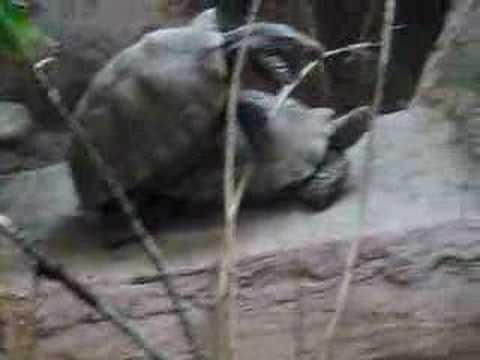 turtleback zoo