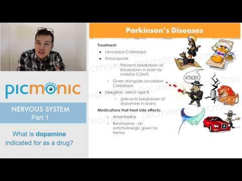 Nervous System | Picmonic Nursing Webinar