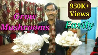 How  To  Grow  Mushrooms Easily at home