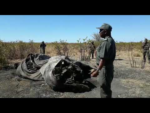 Elephant poaching on the rise in Kruger National Park