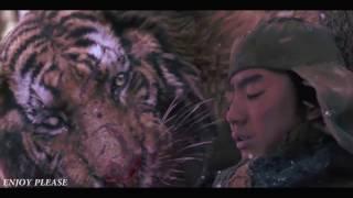 Tiger VS Wolf Fight Scene  HD