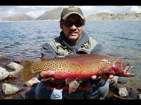 Fly fishing for greenback cutthroat trout 3 colorado for Colorado out of state fishing license