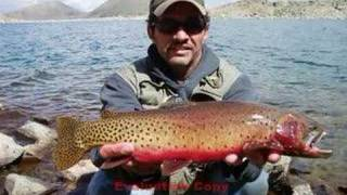 Fly Fishing for Greenback Cutthroat Trout #3 (Colorado)