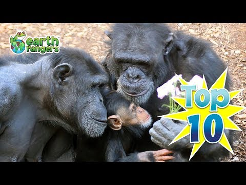 Top 10: Animal Families