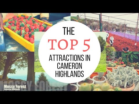 Top 5 Attractions in Cameron Highlands │ Travel Malaysia Guide