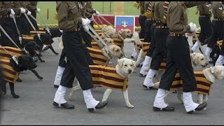 Army dogs will make an appearance in Republic Day parade
