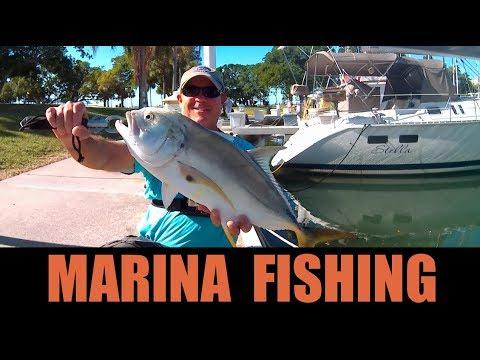Fishing Saltwater Marinas Catching Big Fish on Live Bait Near Boat Docks