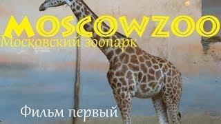 MoscowZoo - Московский зоопарк. Фильм первый