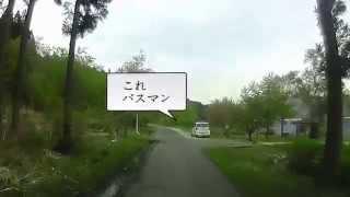 滋賀県余呉湖 大物鯉釣りフィールド