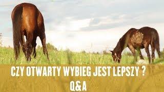 JAKI WYBIEG NAJLEPSZY DLA KONI?  -Q&A Konie Naturalna Hodowla
