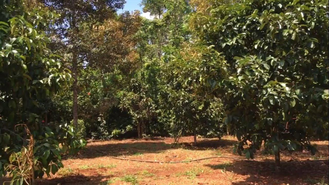 Chú hàng xóm bán đất vườn cây ăn trái xum xuê sát ranh nhà mình ở Bà Rịa nè (ĐÃ BÁN)
