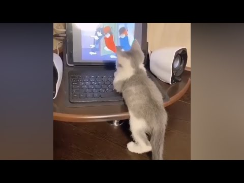 Funniest Animals – Best Of The 2020 Funny Animal Videos – Cutest Animals Ever