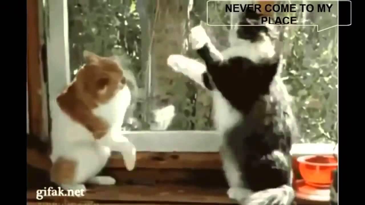 Cel mai nostim video cu animale comice! Merita de privit!