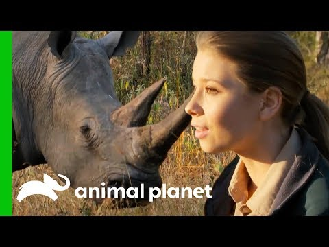 Bindi Has a Magical White Rhino Encounter in the African Bush | Crikey! It's The Irwins