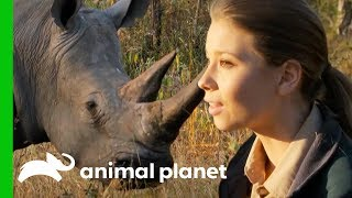 Bindi Has a Magical White Rhino Encounter in the African Bush | Crikey! It