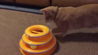 Simba Playing With New Cat Toy