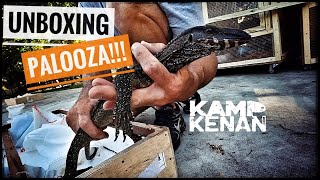 Unboxing 18 New Monitor Lizards!