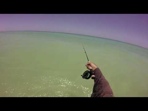 Fly Fishing Oman-Weekend Bream