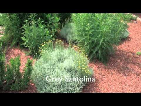 Basic Herb Garden Pictures of herbs YouTube