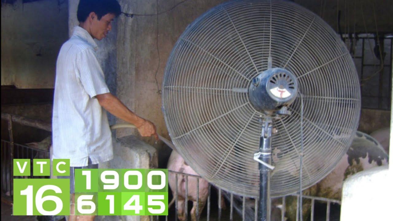 Cách chống nắng nóng cho cây trồng, vật nuôi   VTC16