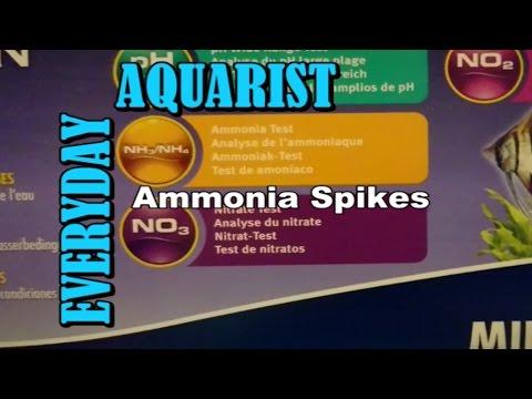 Dealing With Aquarium Ammonia Spikes
