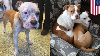 Dog rescued from dumpster is recovered and now needs a home - TomoNews