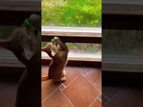 Кайто поймал мышку!😄