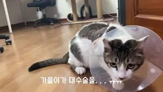 동네 길냥이들한테 혼쭐나고 병원행!#gato#gatoe…