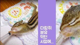 분유 먹는 왕년의 아기 다람쥐