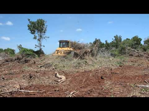 Bulldozer in action in Better Globe Nyongoro plantation 2012