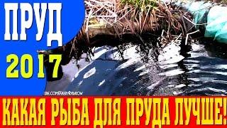 Пруд на даче для разведения рыбы: как сделать, размеры пруда, инструкция, видео