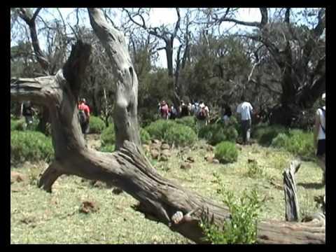 djibouti animals life - forest in africa - safari