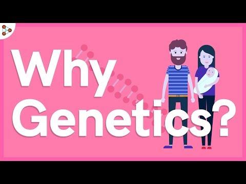 Why Genetics? - Lesson 1 | Don't Memorise