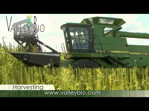 Industrial Hemp production basics for Ontario