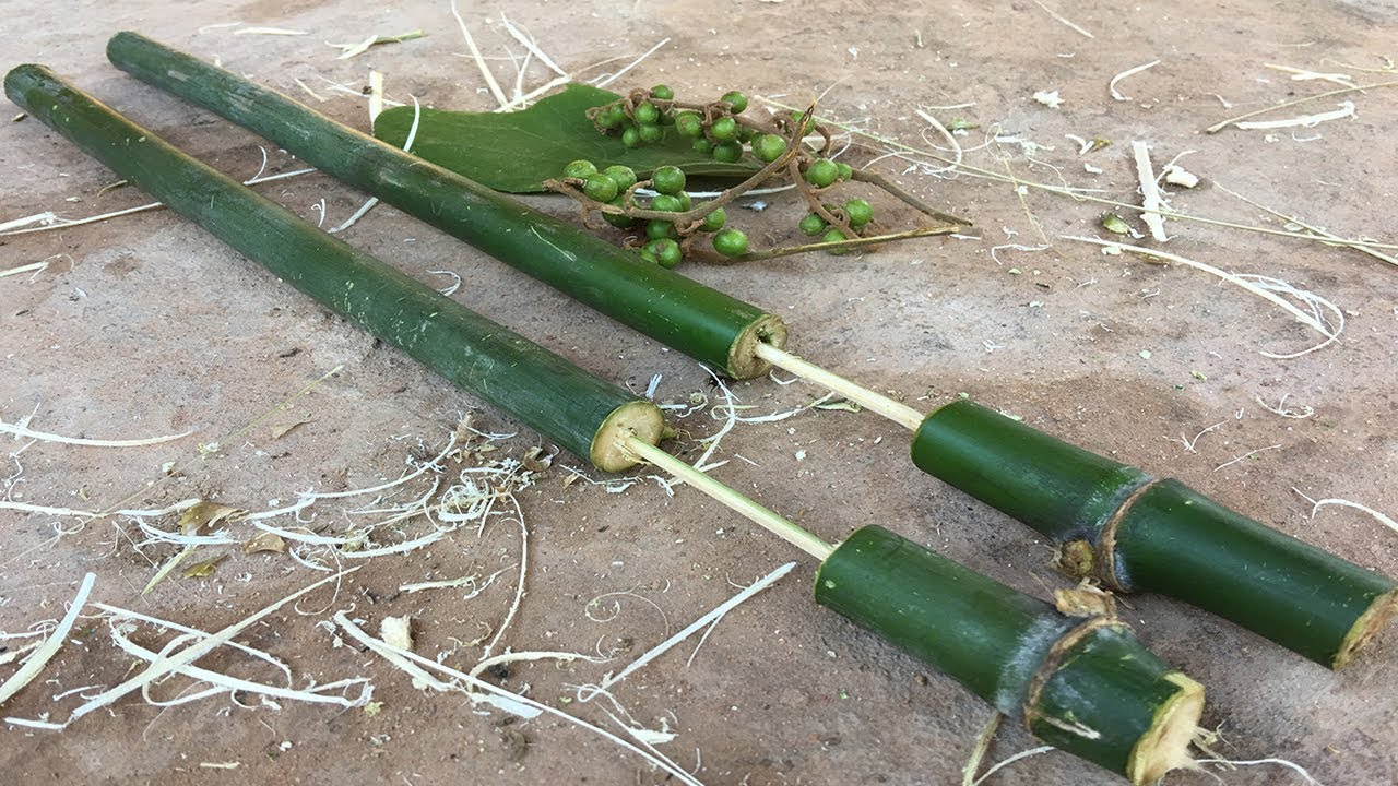 sho gun vs bamboo Louk, tommy, american shogun: reasons why the japanese were fascinated  with general macarthur (2012) senior  macarthur vs  this became known  as the bamboo-shoot existence because a bamboo shoot can.