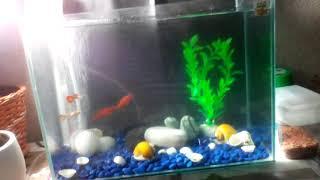 Мой аквариум на 15литров🐬🐋🐟🐠🐡