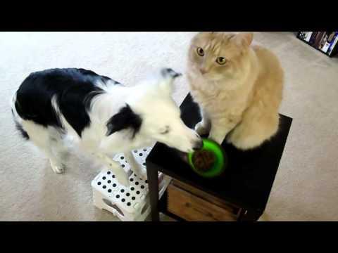 paige,-the-amazing-helper-dog-loves-nylabone!