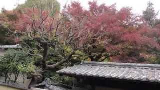 関口芭蕉庵の紅葉